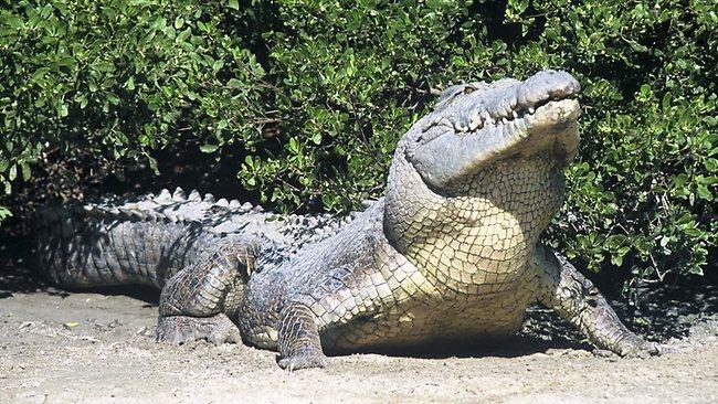 cape-york-croc.jpg