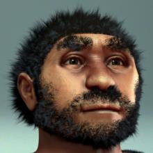 220px-Homo_erectus_pekinensis_-_archeaeological.png