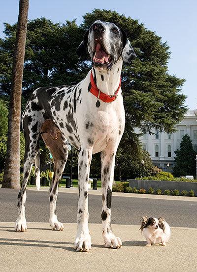 породи собак 2.jpg