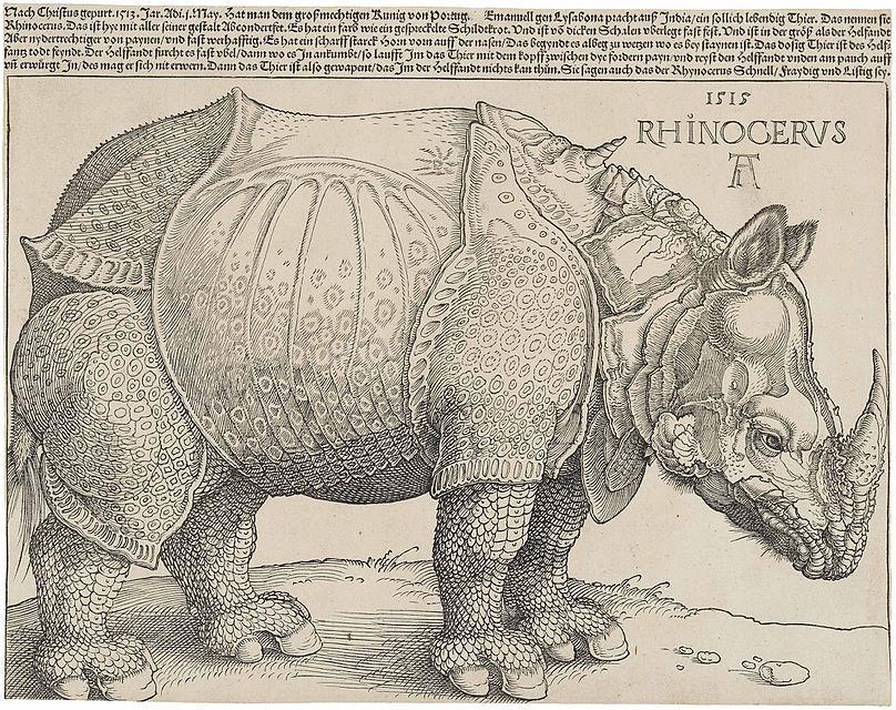 Dürer's_Rhinoceros,_1515.jpg
