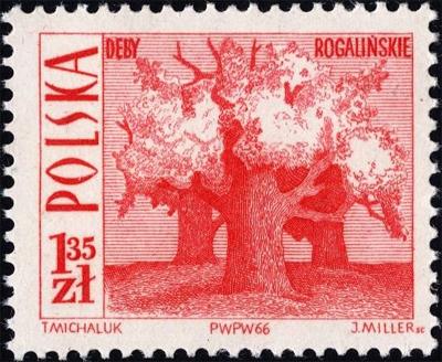 1966 1 35.jpg