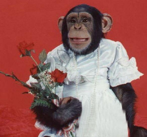 monkey-bride.jpg