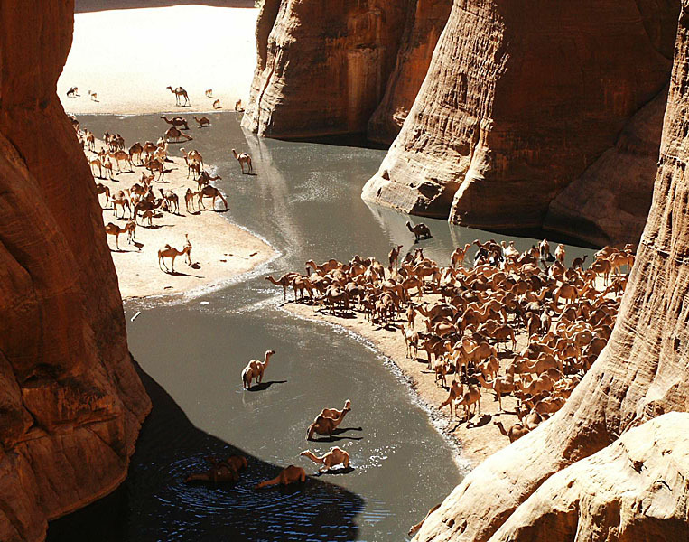 GueltaCamels.thumb.jpg.47e9fbb5be5317cb2
