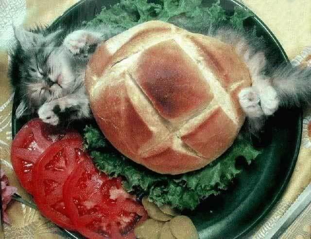 Пироги с котятами.jpg